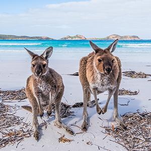 australia compliance update