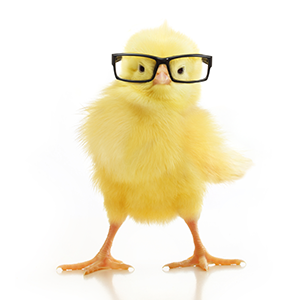 """There seems to be a lot of chicken littles out there shouting that Trade is """"falling""""."""